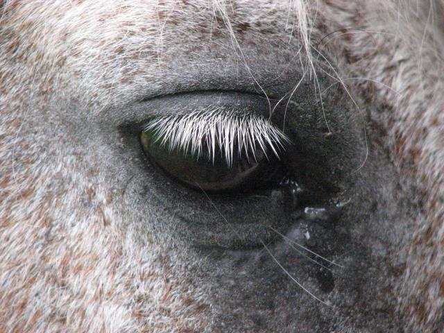 Koń. Fot. D. Dyląg