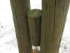 Chlorofil, zielony barwnik pokrywający słupki nośne, który odpowiada za proces fotosyntezy, zawarty jest jedynie w komórkach glonów. Delikatna równowaga między glonem a grzybem świadczy o nieskażonym powietrzu w okolicy